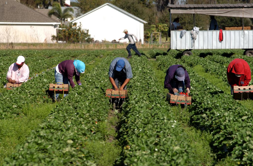 Agricultural sector migrant workers